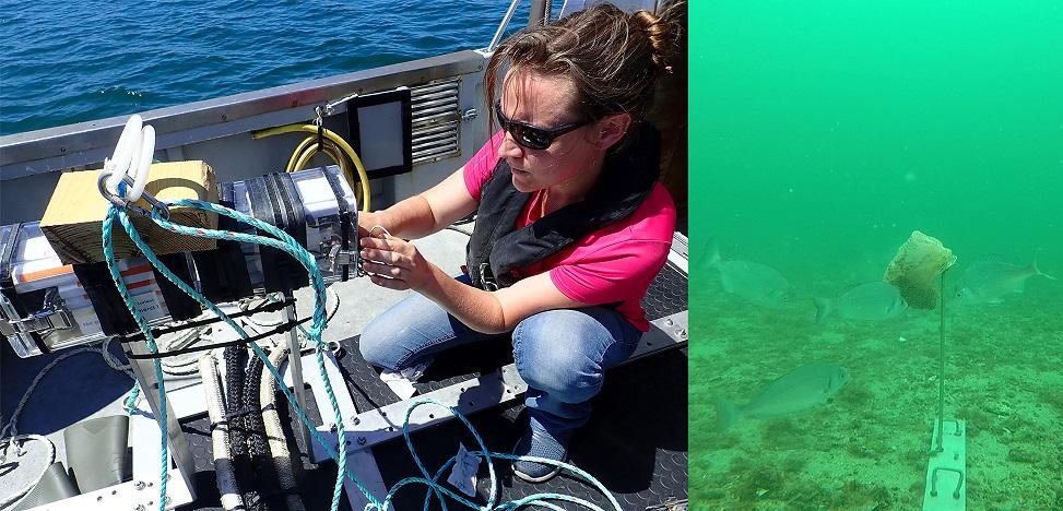 Les lundis de la mer – Observer les poissons sous l'eau pour comprendre comment les capturer