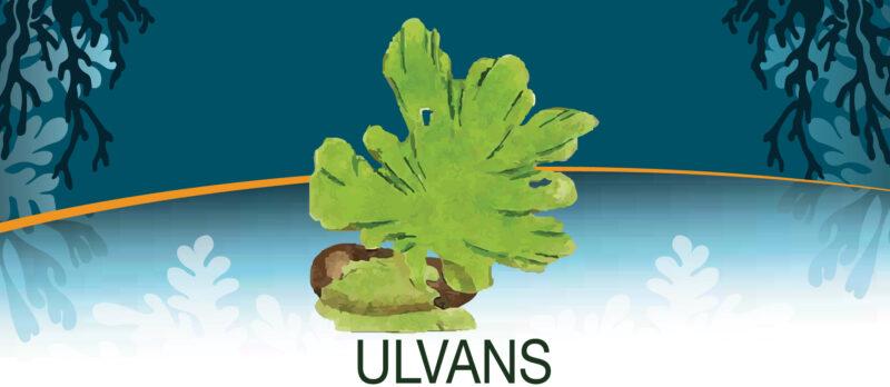 Les lundis de la mer – Le traitement des algues pour la nutrition et la santé animale et végétale
