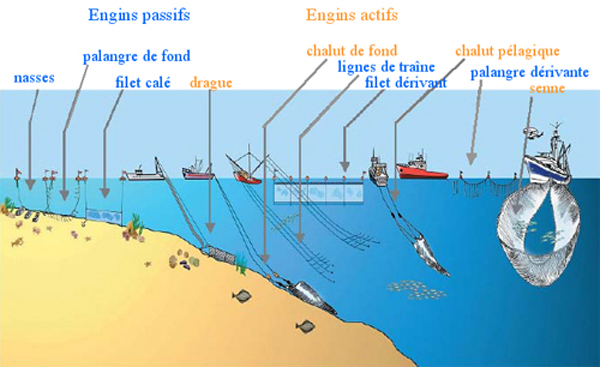 Engins de pêche - Source IFREMER