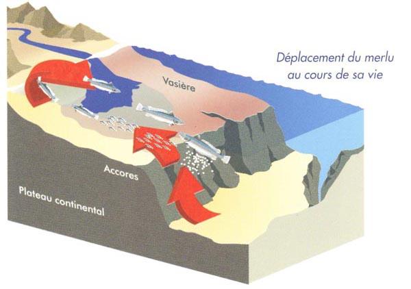 La reproduction : aux limites du plateau continental