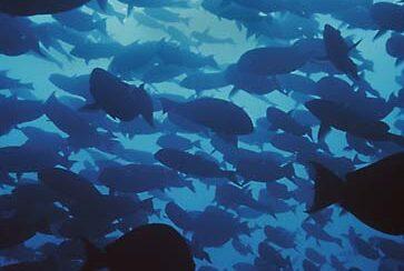 Les lundis de la mer – Les ressources halieutiques : mythes et réalité