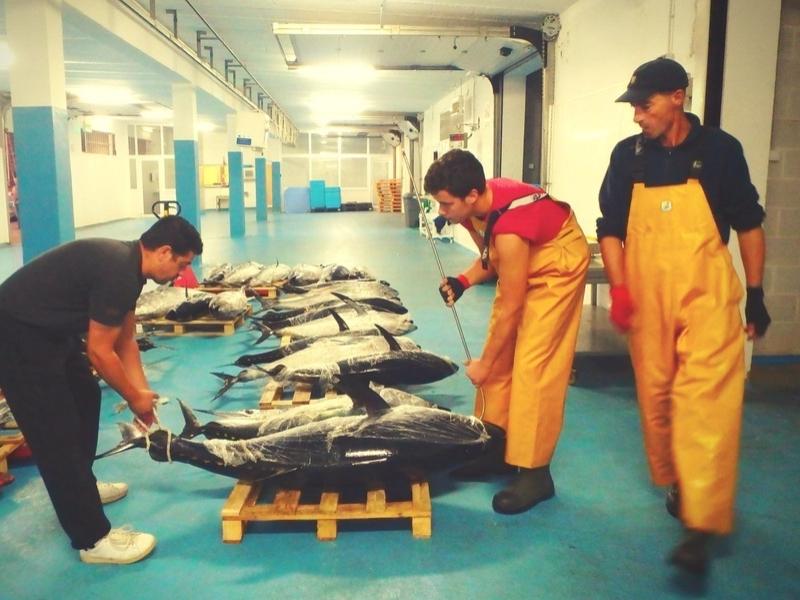 Les lundis de la mer – Regard croisé sur la gestion du thon rouge : d'une Convention internationale aux pratiques locales