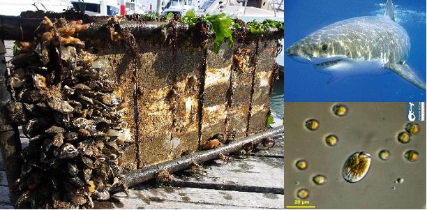 Les lundis de la mer – Stratégies antifouling : la solution se trouve-t-elle dans les océans ?