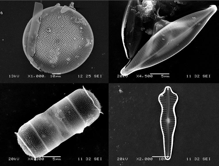 Les lundis de la mer – Les diatomées manipulent-elles la lumière ?
