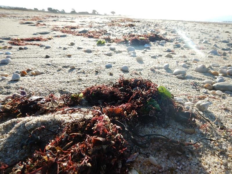 Les lundis de la mer – Les grains de sable sont de grands voyageurs