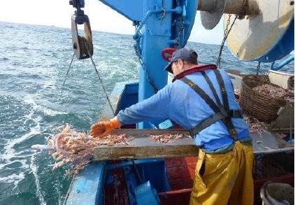 Les lundis de la mer – Pour une pêche durable de la langoustine