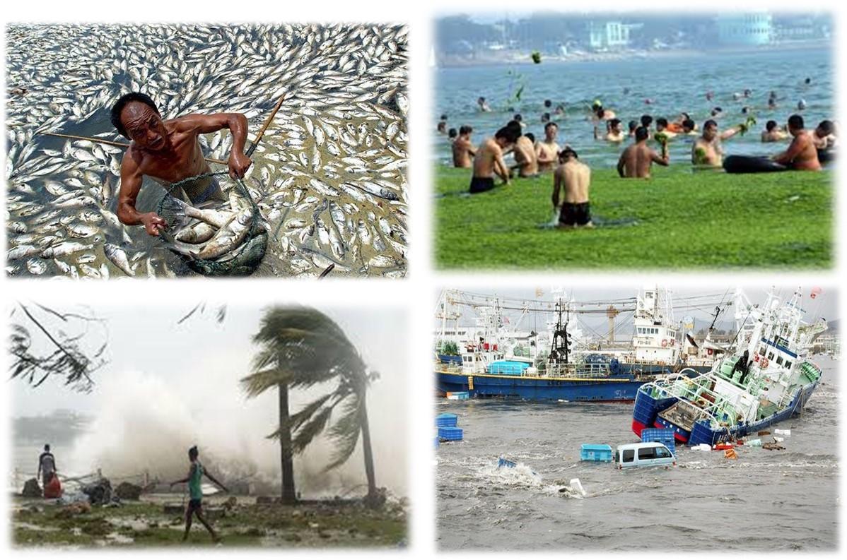 Les lundis de la mer – Les effets du changement global sur les socio-écosystèmes marins