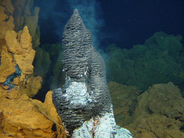 Les lundis de la mer – Coloniser les milieux marins extrêmes : l'adaptation, c'est la vie !