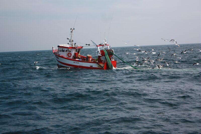 Les lundis de la mer – Changement climatique, les poissons remontent vers le Nord