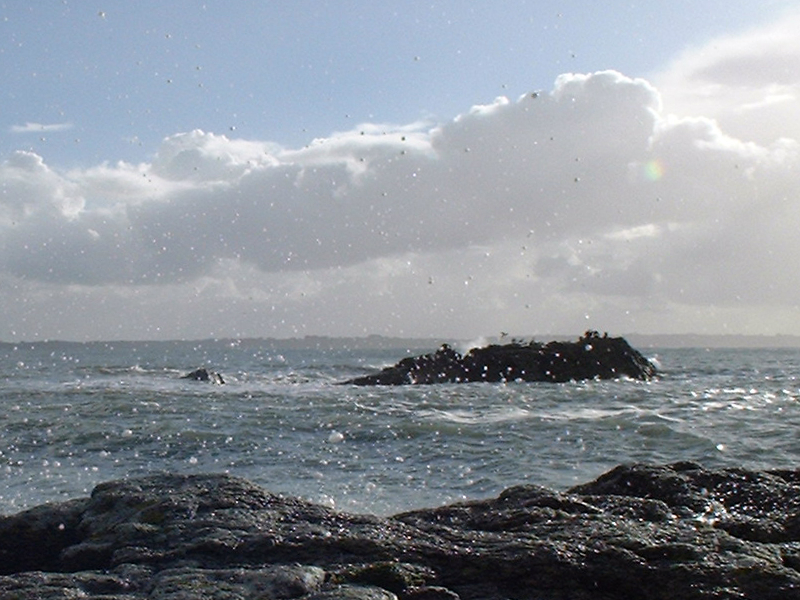Les lundis de la mer – Milieu marin : être ou ne pas être en bon état écologique