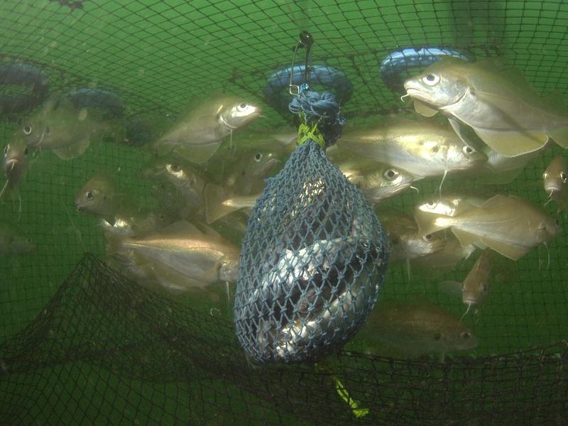 Les lundis de la mer – L'innovation technologique peut-elle contribuer à une pêche durable ?