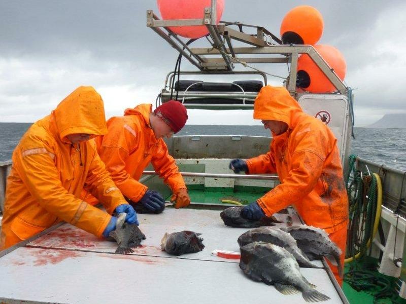 Les lundis de la mer – Les quotas individuels transférables : l'exemple islandais