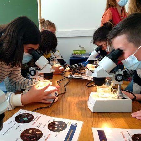 Observation d'échantillons de sable à l'aide de loupes binoculaires